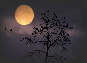 Full Moon of Guru Purnima